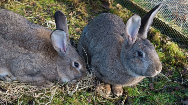 RT @ISPCA1: 7 #rabbits looking for new homes at th…